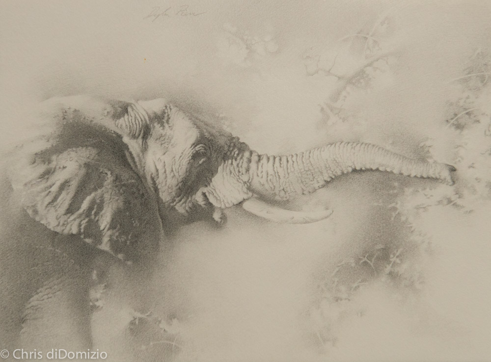 Dyalln Scott Pierce original graphite drawing elephant