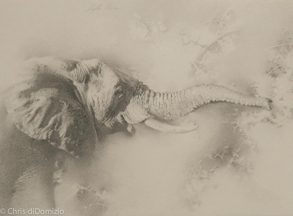 Dyalln Scott Pierce original graphite drawing elephant