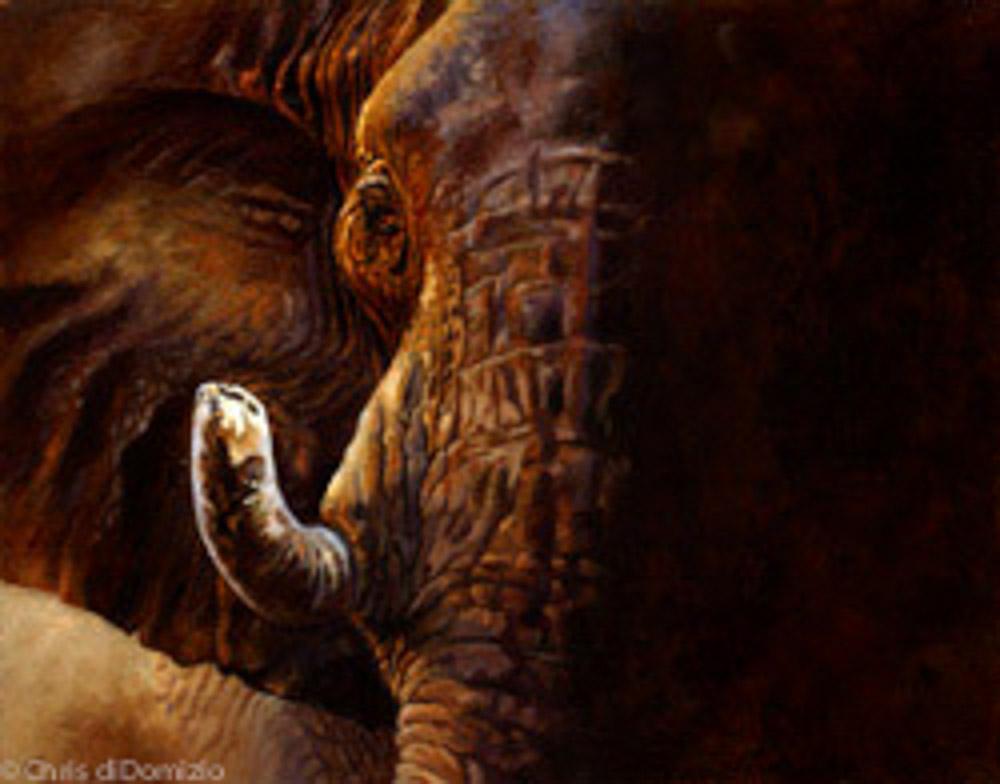 Sonja Ried original oil painting elephant